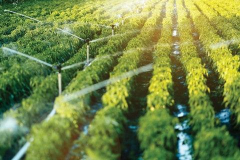 Irrigators having a field day with energy savings