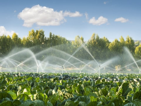 Gold benchmark set for water irrigation