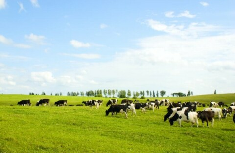 Energy efficiency initiative launched to support dairy farmers