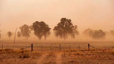 Drought Resilience Hub launched in Wagga Wagga