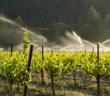 $3.5 million to Barossa for water infrastructure
